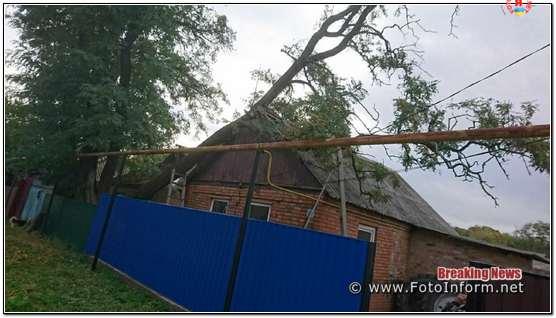 дерево впало на житловий будинок