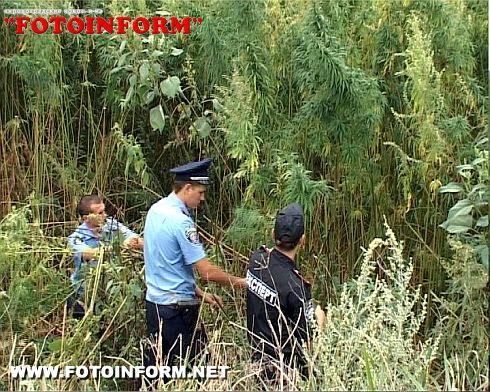 На Кіровоградщині вилучено більш як півмільйона рослин коноплі (ФОТО)