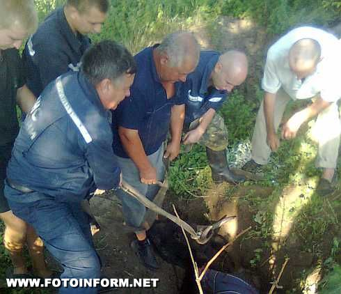 Олександрія: з ями на пасовищі звільнили корову (ФОТО)