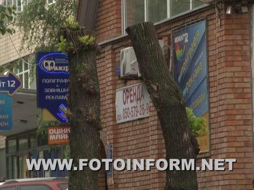 В Кировограде вандально обрезают насаждения (ФОТО)