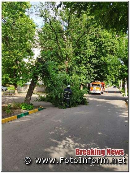 7 липня о 16:09 до Служби порятунку «101» надійшло повідомлення про те, що на вул. Подільській в обласному центрі гілка аварійного дерева відчахнулась та впала на тротуар.