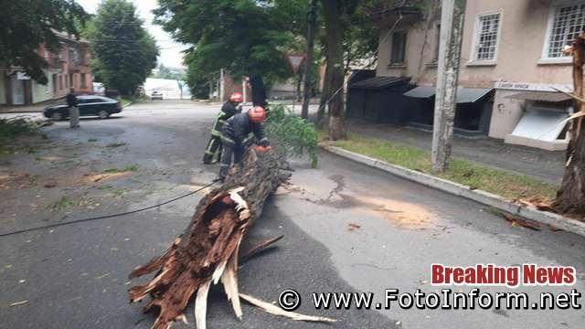 На Кіровоградщині 32 дерева впали на проїжджу частину доріг