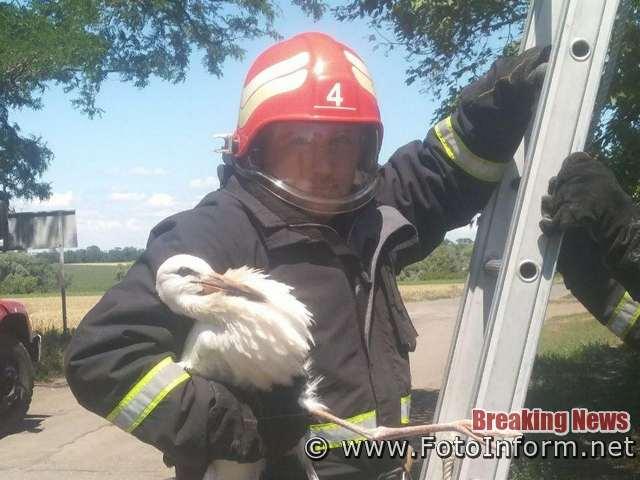 17 липня об 11:13 до Служби порятунку «101» надійшло повідомлення про те, що в с. Могутнє Кропивницького району лелеченя випало з гнізда.