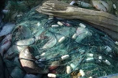 У браконьєрів вилучили майже півтонни риби (ФОТО)